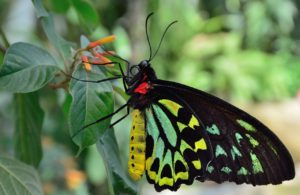 Butterflies can be supplied for events, exhibits, or educational purposes.