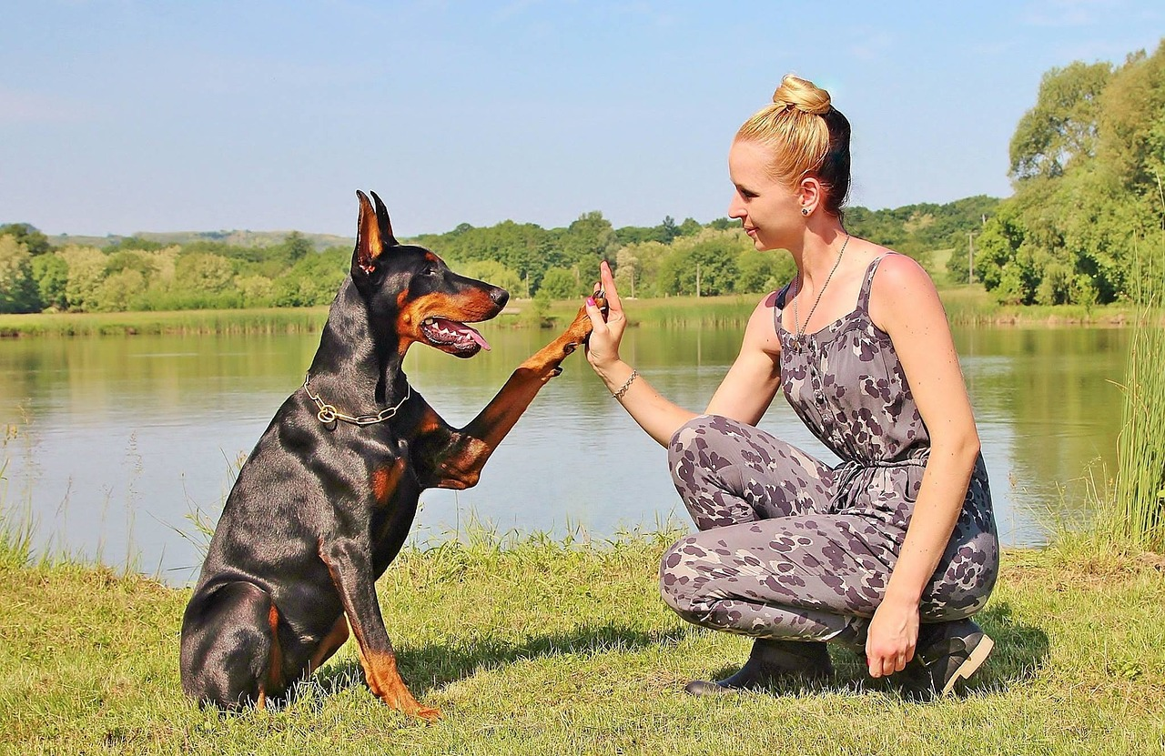 Dog Trainer Career Overview