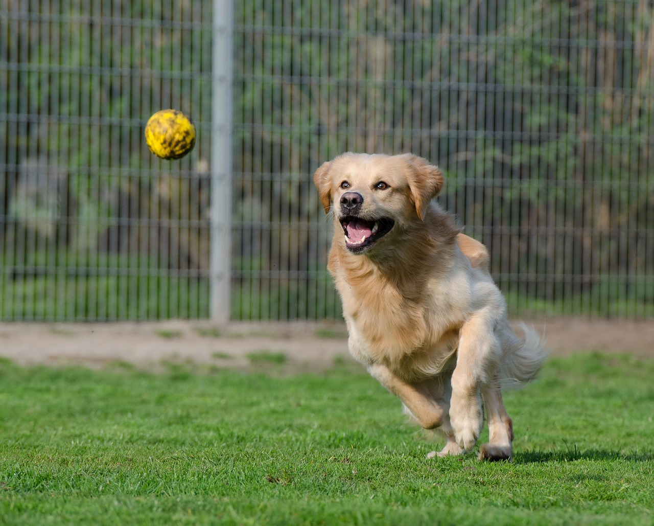 Let S Take A Look At Some Of The Steps Involved In Starting Doggie Day Care Business