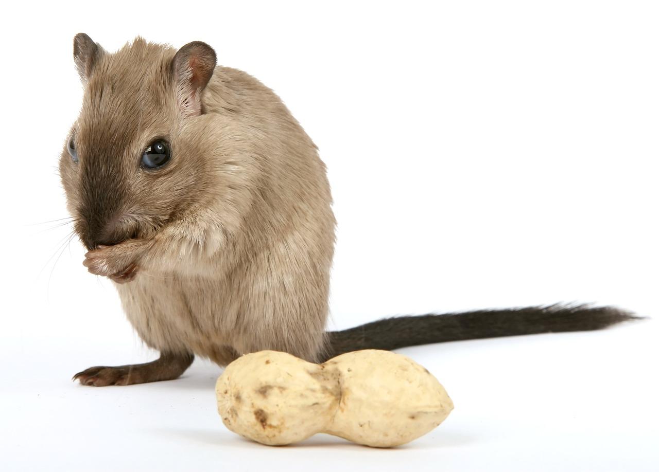 New Vet Tech Specialty Announced Animal Career Expert